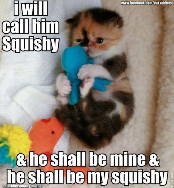 """top 50 funny Animals, Quotes and #funny explore Pinterest""""> #funny #picture searc..."""