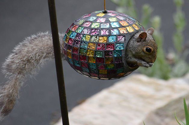 Squirrels can be a pain, but they're also pretty darn cute, too. Check out…