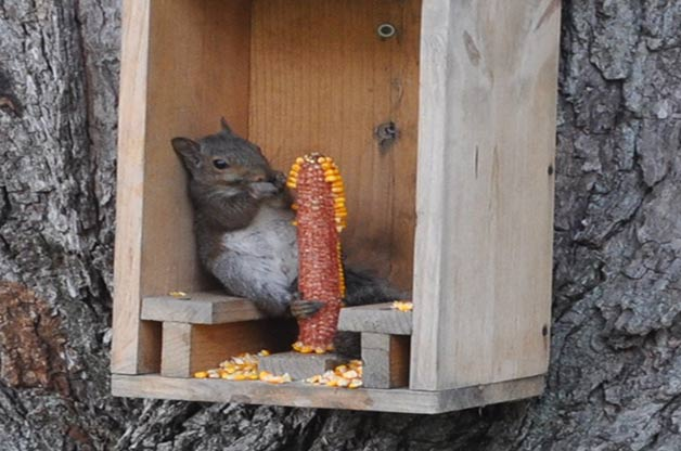 Squirrels can be a pain, but they're also pretty darn cute. Rule of 5-7-9:…