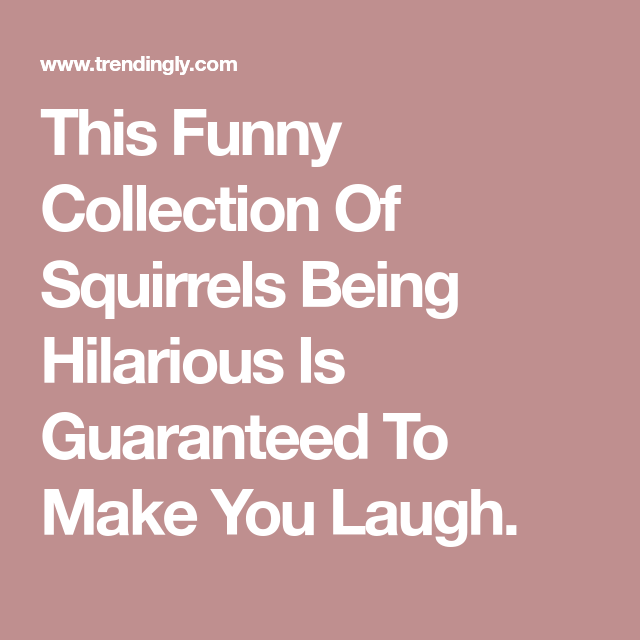 This Funny Collection Of Squirrels Being Hilarious Is Guaranteed To Make You Laugh