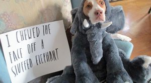 Dog this what they mean when they the punishment fit the crime? :-) #funnydogshaming…