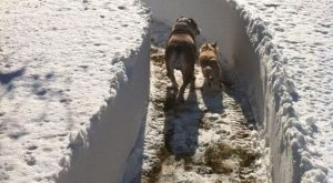 """""""Made a path around the house, they've been running for an hour trying to…"""