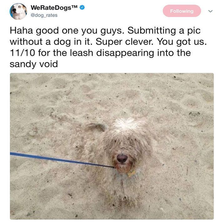 """Funny Dogs Pictures From Twitter #DogPictures explore Pinterest""""> #DogPictures #f..."""