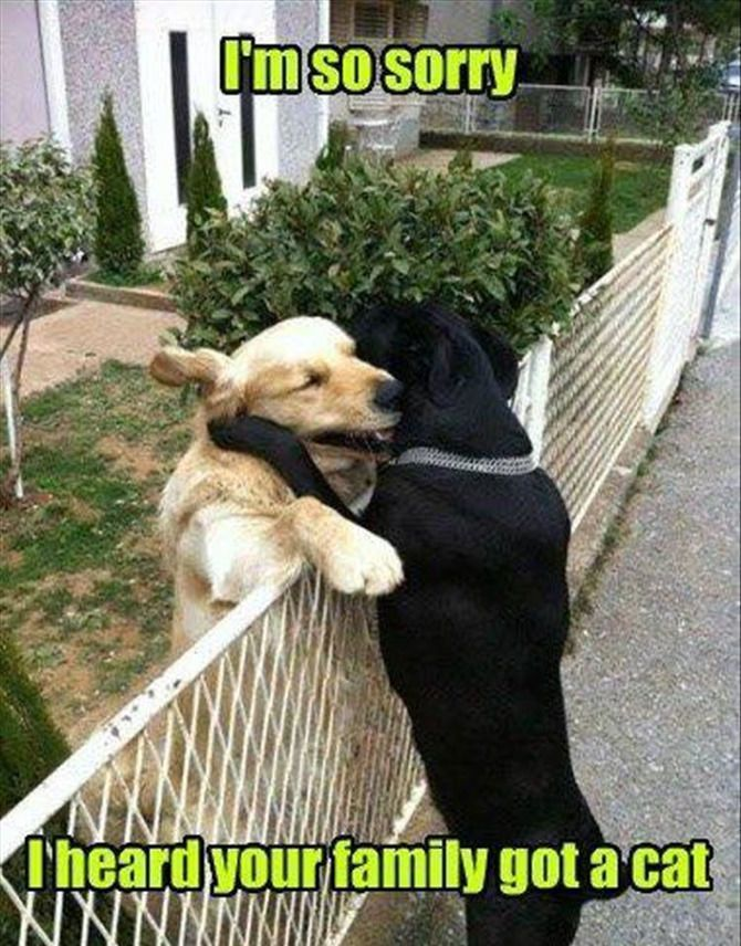 Funny Animal Pictures Of The Day – 16 Images #AwesomePictures explore Pinterest&#822...