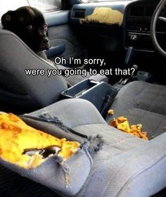 """Funny Animal Picture Dump Of The Day 23 Pics #funnydoglaughter explore Pinterest""""&gt..."""