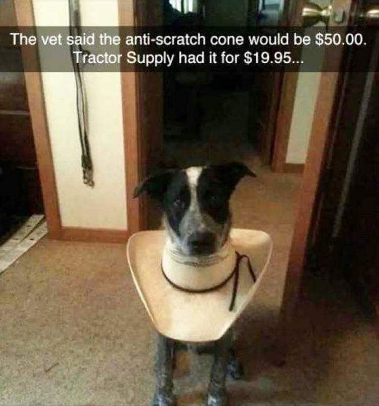 Funny, Memes, Pictures: funny-animals-3-8