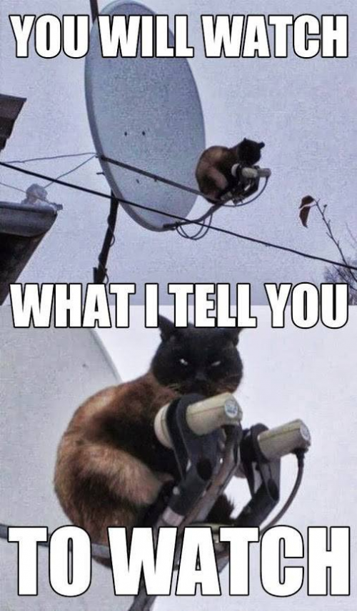 """Silly funny cat #funnycatmemes search Pinterest""""> #funnycatmemes #funnycats search P..."""