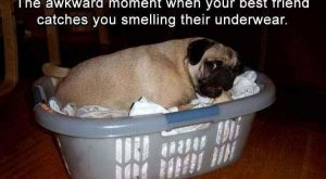 20 Funny Animal Memes To Get You Ready For The Weekend #funnydogshaming explore Pinterest&...