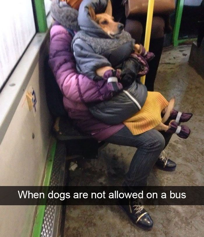 10+ Hilarious Dog Snapchats That Are Impawsible Not To Laugh At (Part 2) #funnydoghilariou...