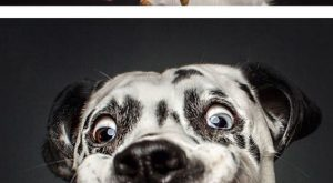 Expressions of Dogs Catching Treats In Mid-Air (By Christian Vieler-Kircher) – 9GAG ...
