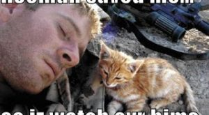 Really Funny Cats with Captions | Very Cool funny pictures with captions