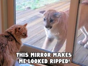 Funny Pictures For Today ( #127)