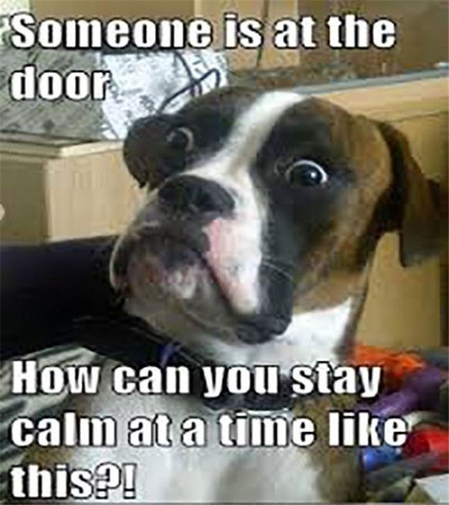 """40 So Funny Dog Pictures To Make You Laugh #funnydogs explore Pinterest""""> #funnydogs..."""