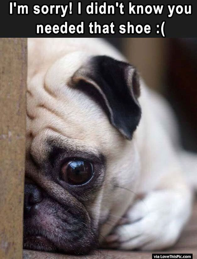 I Didn't Know You Needed That Shoe cute animals dogs adorable dog puppy animal…