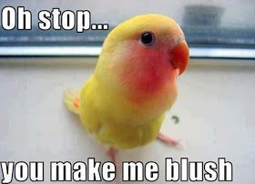 Funny animal pictures with captions, animal caption pictures, funny caption pictures, anim...