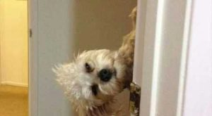 "37 Of The Best Funny Animal Pictures Ever #funnydogpictures explore Pinterest""> #..."