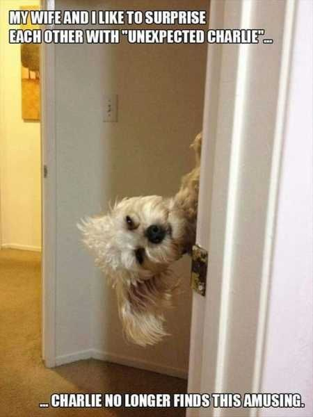 """37 Of The Best Funny Animal Pictures Ever #funnydogpictures explore Pinterest""""> #..."""