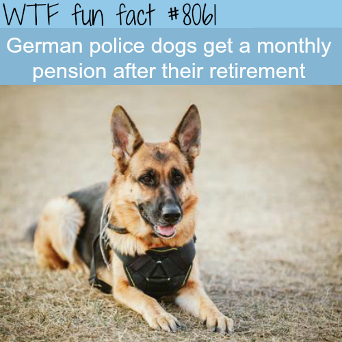 German police dogs get a pension after retirement – WTF fun fact