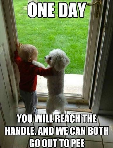 TOP 44 Funny Dog Memes More
