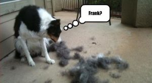 "Frank? lol #dog search Pinterest""> #dog #humor search Pinterest""> #humor..."