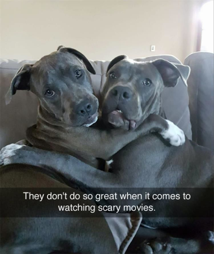 Funny Animal Pictures Of The Day – 11 Images