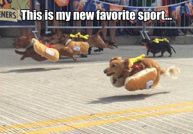 Funny Animal Pictures Of The Day – 19 Pics #funnydoghilarious explore Pinterest&#822...
