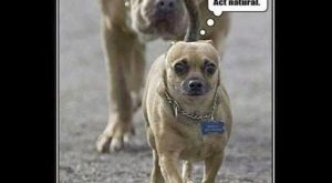 Funny dog pictures with 23 pictures like shotgun dog. Some funny dog pictures with…