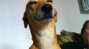 44 Of The Happiest Dog Memes That Will Keep You Laughing For Hours #dogmemes…