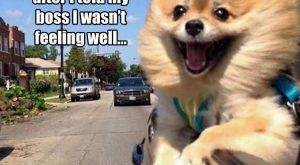 "Funny Pictures Of The Day – 33 Pics #funnydogwithcaptions explore Pinterest""&g..."