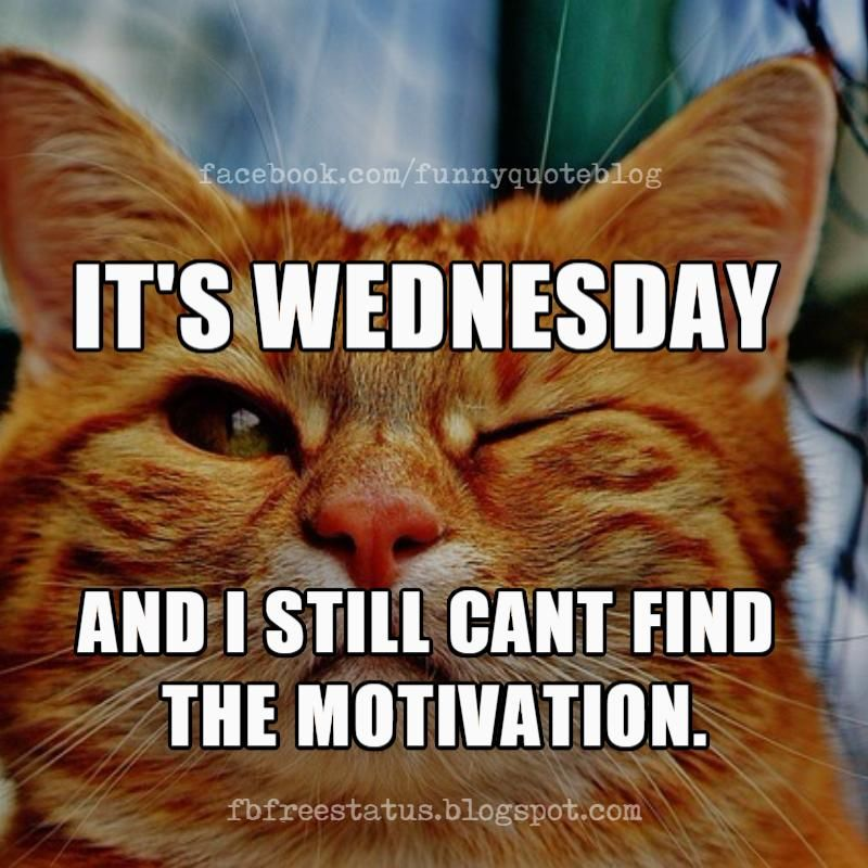 It's Wednesday Memes, It's Wednesday and i still can't find motivation