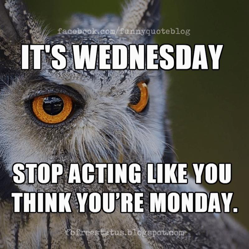 Wednesday Memes, It's Wednesday stop acting like you think you're Monday