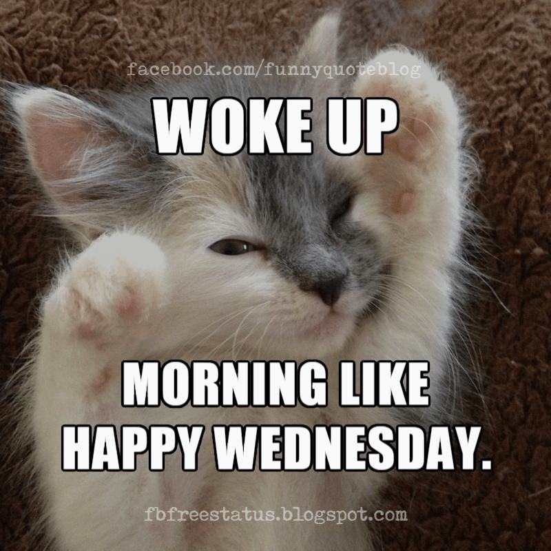 Happy Wednesday Memes, Woke up Morning Like. Happy Wednesday