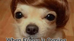 Happy Wednesday Memes, Happy Wednesday, When Friday is Coming