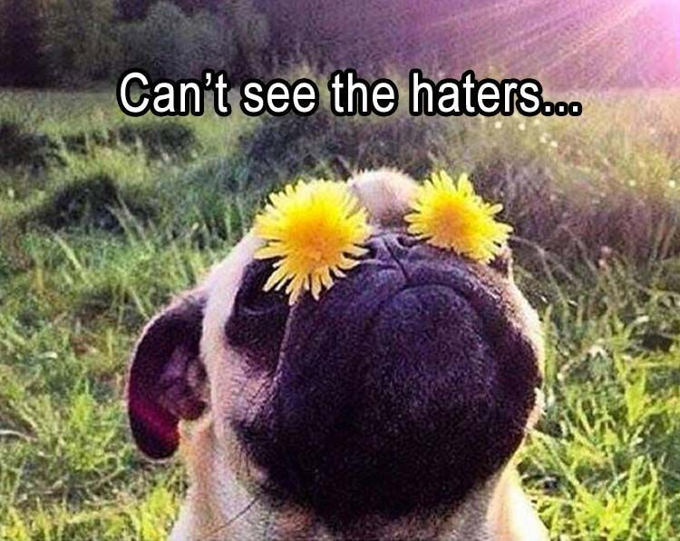 Lol. Look at that face. How could there be any haters??? #funnydoglaughter explore Pintere...
