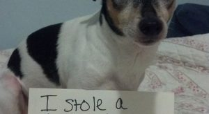 "WTF Picture Dump #funnydogshaming explore Pinterest""> #funnydogshaming"