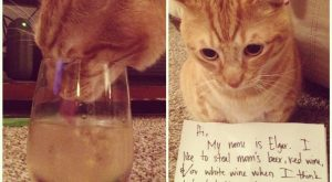 "Alcoholic cat #funnydogshaming explore Pinterest""> #funnydogshaming"