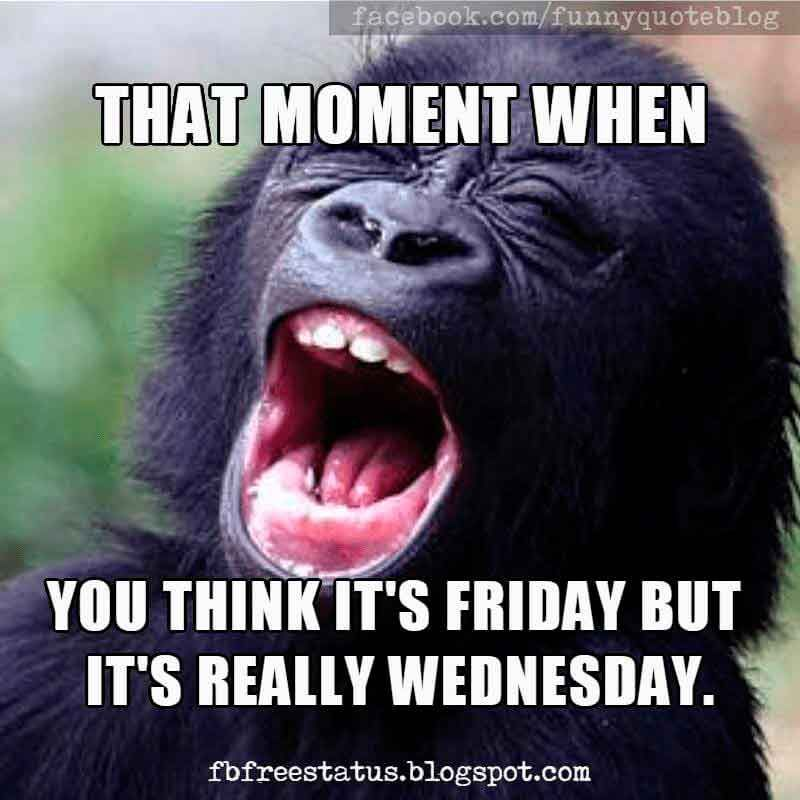 Funny Wednesday humor, that moment when you think it's friday but it's really ...