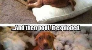 "34 Super Funny And Cute Animal Pictures #funnydogmeme explore Pinterest""> #funnyd..."