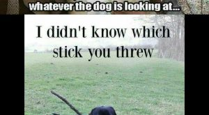 "Funniest Memes ft. Funny Dogs #funnydoghilarious explore Pinterest""> #funnydoghil..."
