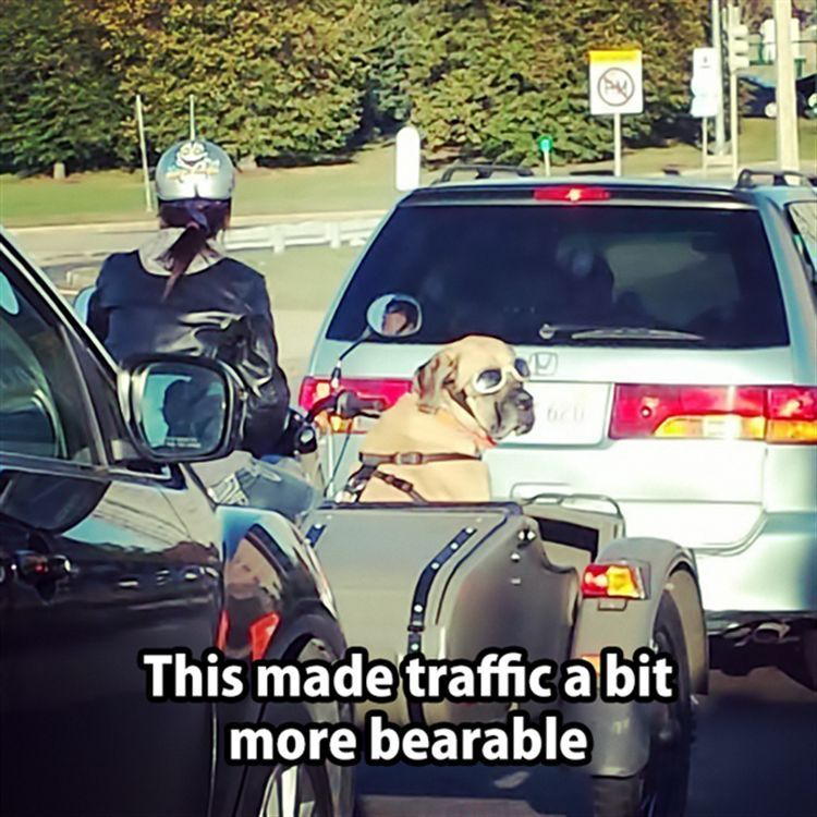 Amazing And Funny Animals To Start The Week – 20 Pics #funnydogvideos explore Pinterest&...