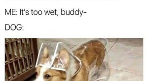 "40 Funny Dog Pictures With Captions #funnydogwithcaptions explore Pinterest""> #fu..."