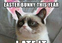 No Easter says Grumpy Cat 5