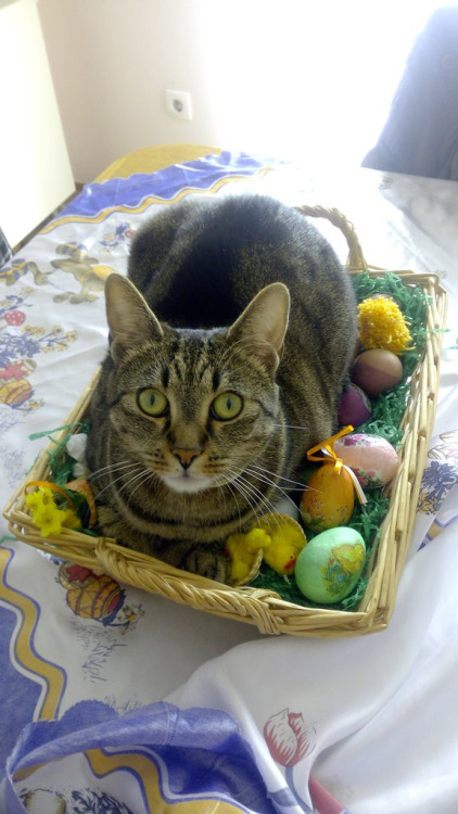 cute-overload:Easter cathttp:/… source:
