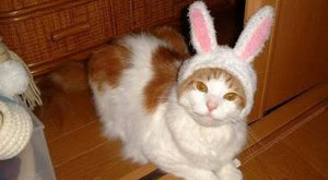 Happy Easter cat ! Cat memes – kitty cat humor funny joke gato chat…