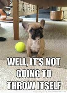 "funny dog pictures with captions – Bing Images #Dogs explore Pinterest""> #Dogs..."