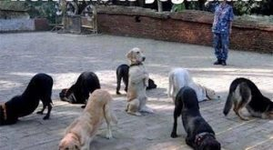 "Welcome To Yoga Class : DOGS – Also Known As ""Doga"" – Funny Animal..."