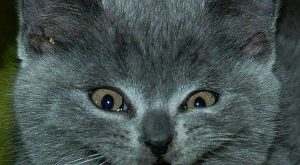 Image Detail for – Funny Pictures of Cats With Captions-the cat with evil smile