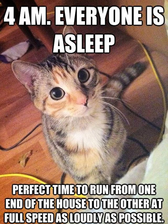 funny-capt-pictures-with-captions-sayings-photos-4am-lolcaption