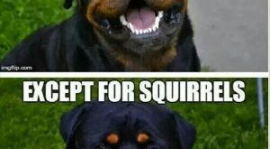 Funny Animal Pictures With Caption (22 Pics)
