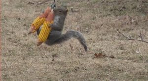 squirrels | Monday Morning Funny – Squirrels | Bytes From Babylon